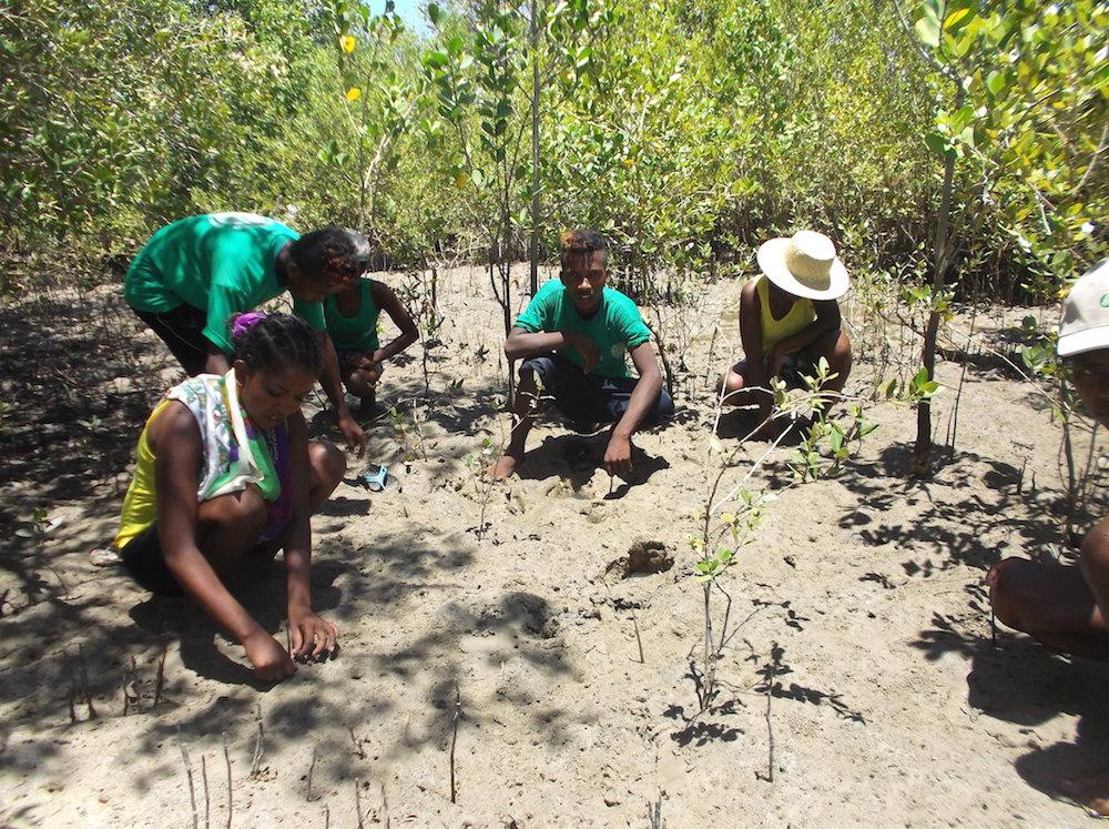 Les élèves du Centre de Formation en Agroforesterie et Écotourisme de Mangily contribuent à la préservation des mangroves du sud-ouest de Madagascar