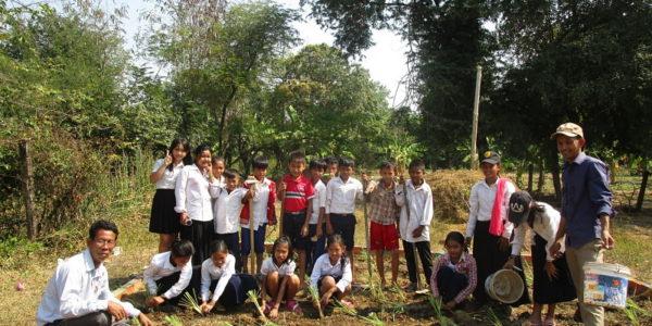 Jardins biologiques, la citronnelle en cours de culture