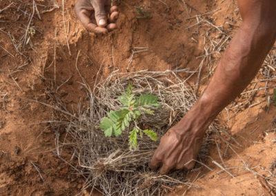 La micro-réserve endémique au sud-ouest de Madagascar