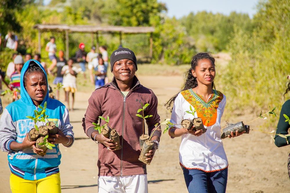 Vers une restauration de la mangrove pour préserver les écosystèmes et les espèces qui en dépendent