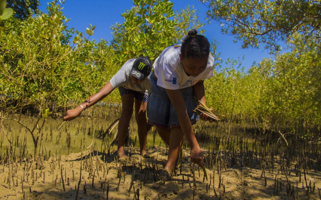 Planter des arbres pour compenser nos émissions de CO2